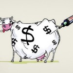 Meat, Money & Antibiotics – How the Food Chain is Endangered for Profit