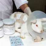 The Truth About Avon's Animal Testing Policy