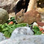 What Do Vegans Eat? A Walk Through My Kitchen Cupboards
