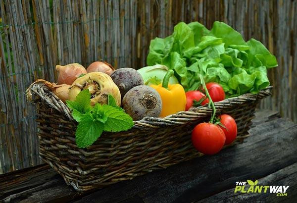 vegan blog