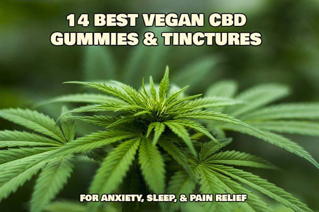vegan-CBD-gummies-tinctures-hemp-plant