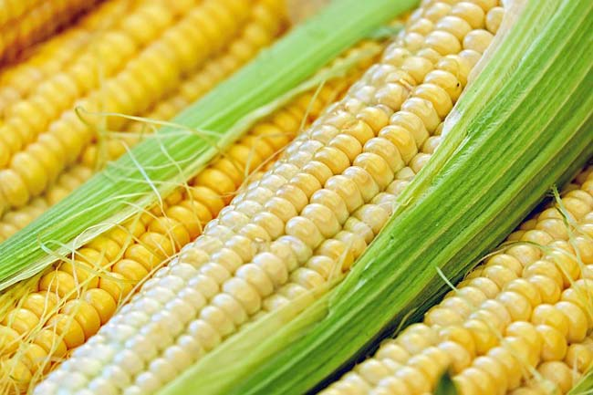 corn-protein-rich-vegetable