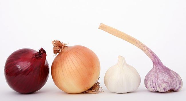 GBOMBS-onions