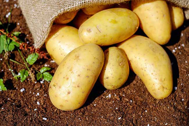 potatoes-best-carbs-to-eat