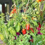 Grow Your Own at Home: Garden Tower 2 Review
