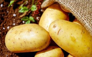 survival-crops-vegetables