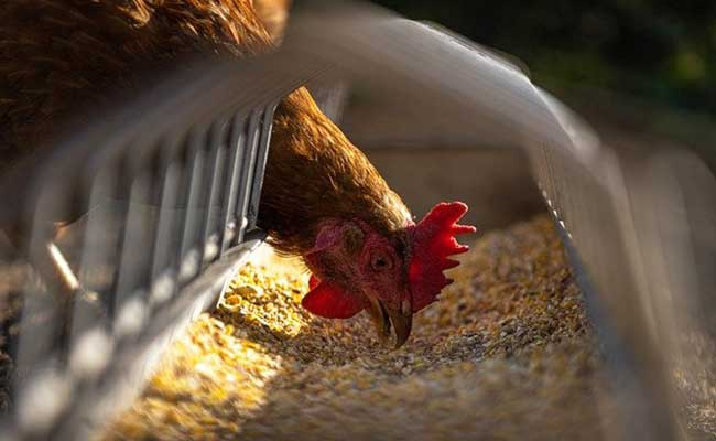 vegan-egg-alternatives
